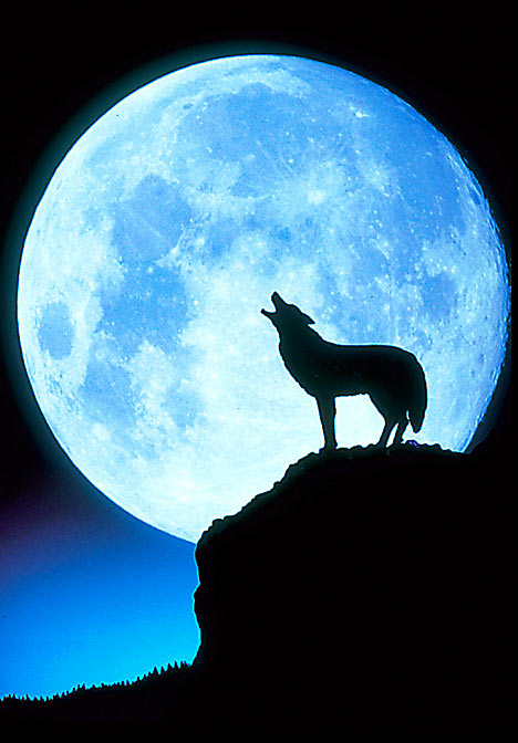 Full Moon coyote - cosmicallychic.wordpress.com